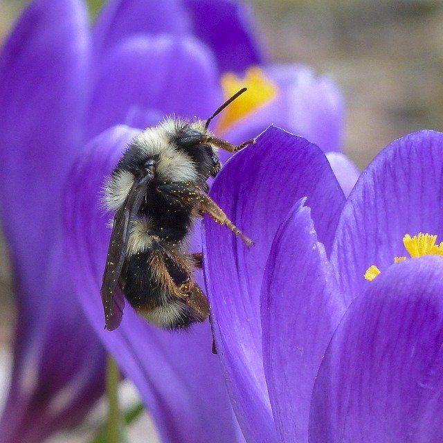 uratuj pszczołę