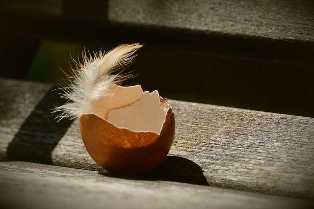 produkcja bioplastiku ze skorupek jaj