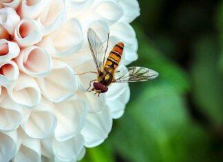 pszczoły pod ochroną