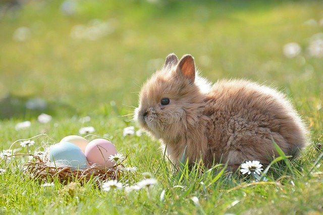 zwyczaje związane z jajkami