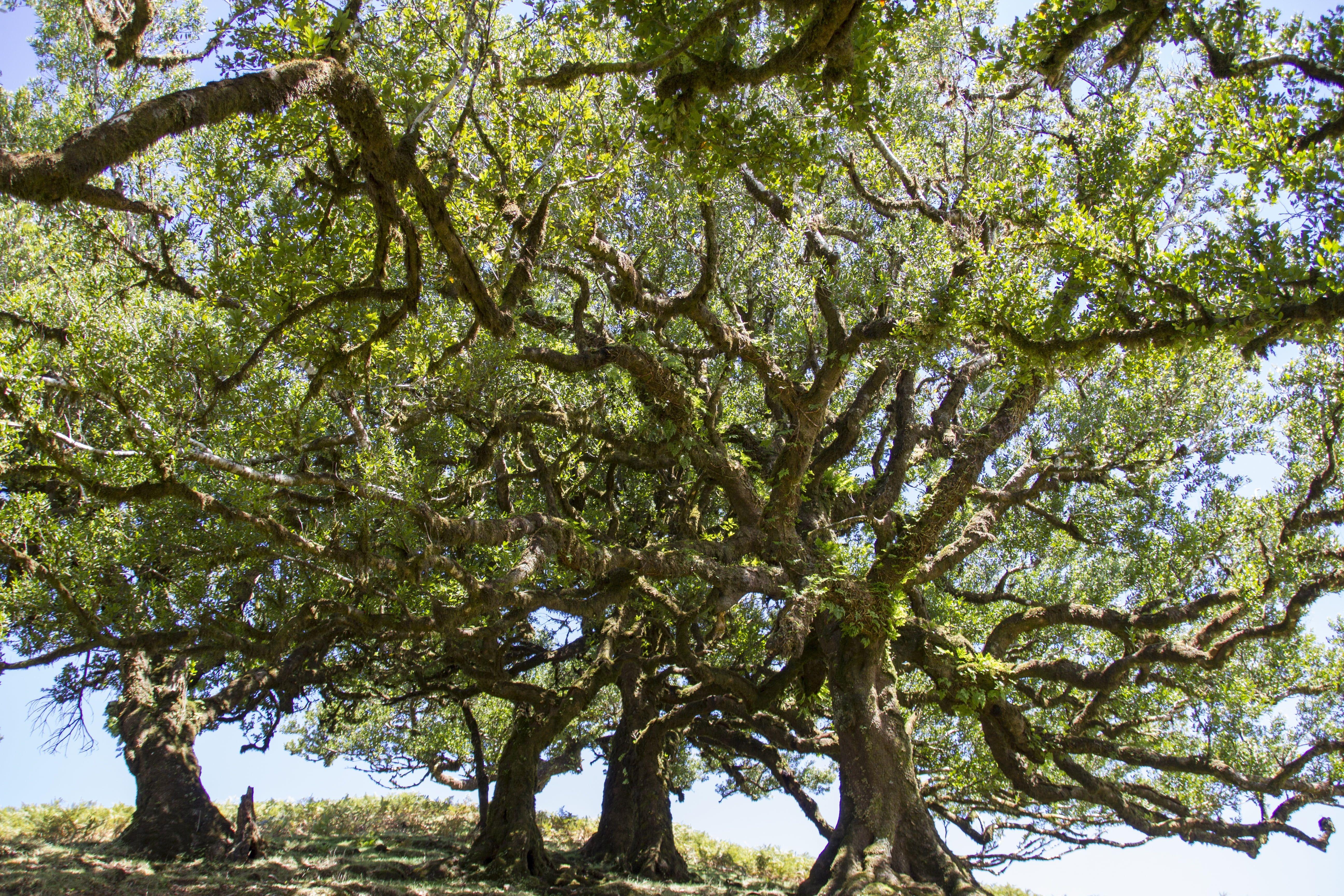 lasy wawrzynowe