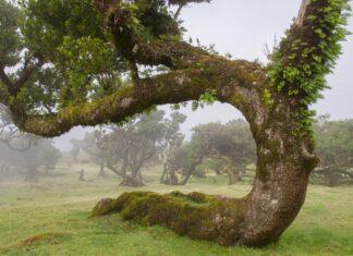 lasy na liście światowego dziedzictwa przyrodniczego